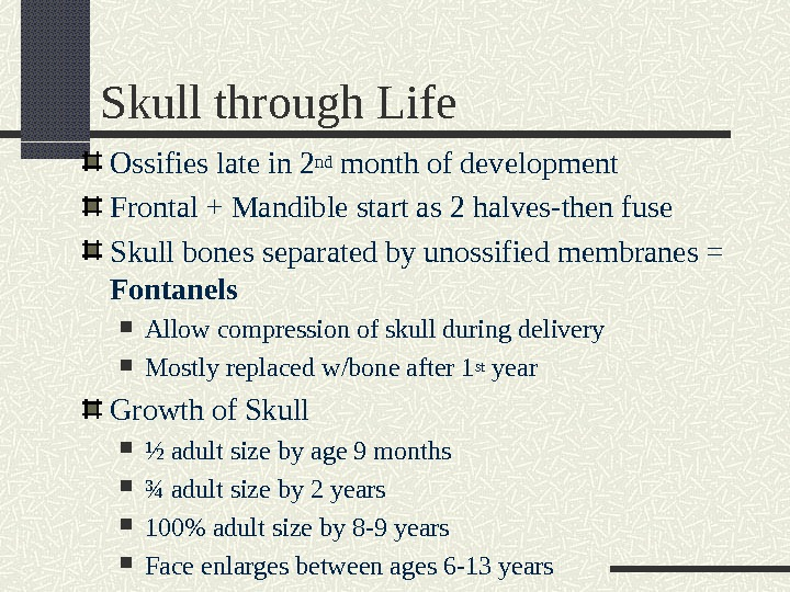 Skull through Life Ossifies late in 2 nd month of development Frontal + Mandible start as