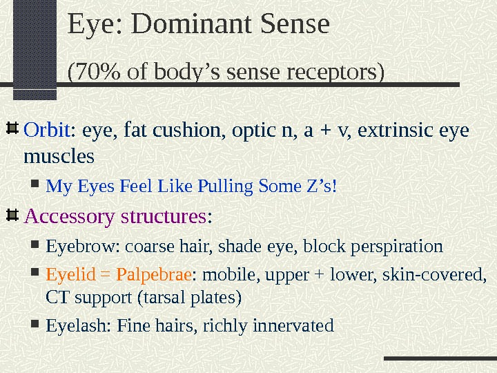 Orbit : eye, fat cushion, optic n, a + v, extrinsic eye muscles My Eyes Feel