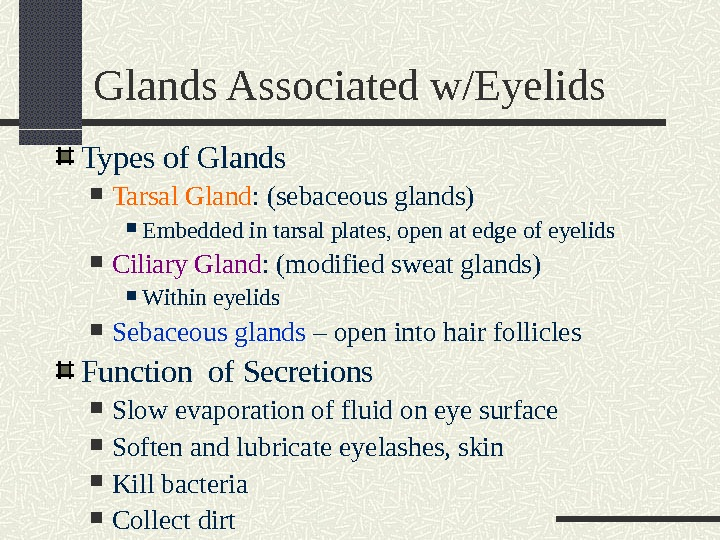 Glands Associated w/Eyelids Types of Glands Tarsal Gland : (sebaceous glands) Embedded in tarsal plates, open