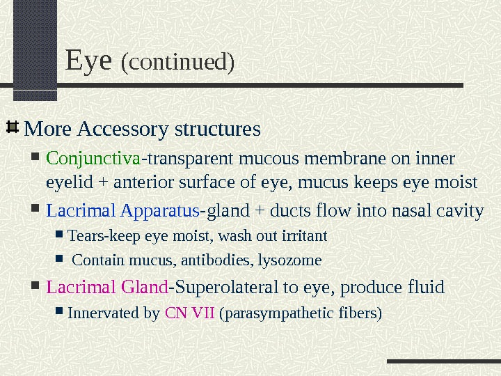 Eye (continued) More Accessory structures Conjunctiva -transparent mucous membrane on inner eyelid + anterior surface of