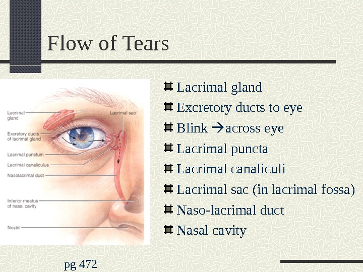 Flow of Tears Lacrimal gland Excretory ducts to eye Blink  across eye Lacrimal puncta Lacrimal