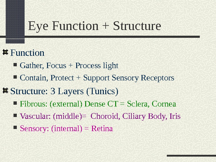 Eye Function + Structure Function Gather, Focus + Process light Contain, Protect + Support Sensory Receptors