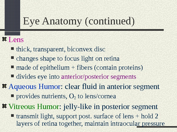 Eye Anatomy (continued) Lens thick, transparent, biconvex disc changes shape to focus light on retina made