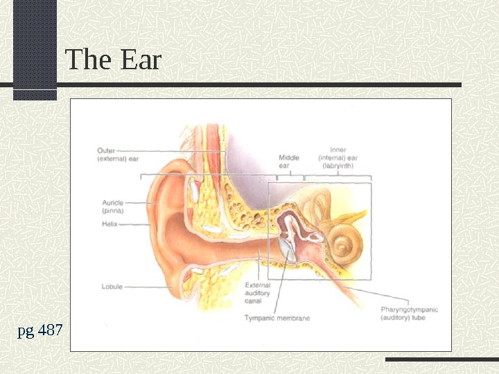 The Ear pg 487