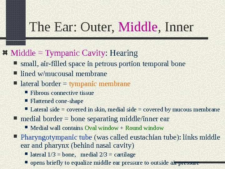 The Ear: Outer,  Middle , Inner Middle = Tympanic Cavity : Hearing small, air-filled space