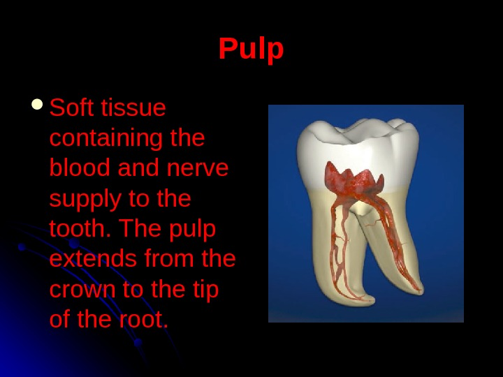 Pulp Soft tissue containing the blood and nerve supply to the tooth. The pulp