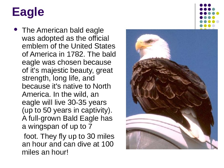 Eagle The American bald eagle was adopted as the official emblem of the United States of