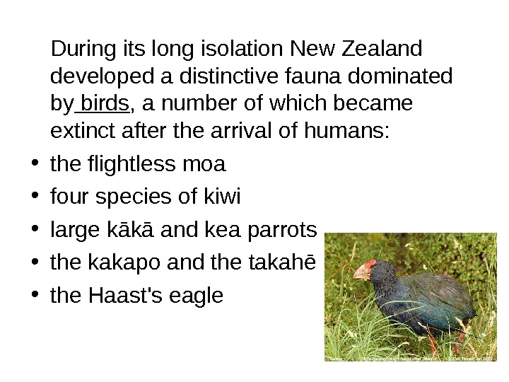During its long isolation New Zealand developed a distinctive fauna dominated by birds ,