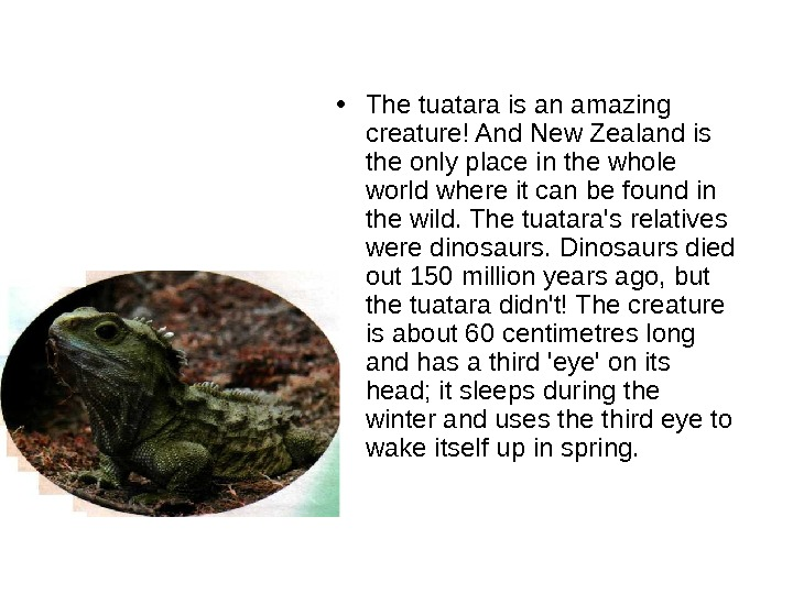 • The tuatara is an amazing creature! And New Zealand is the only place