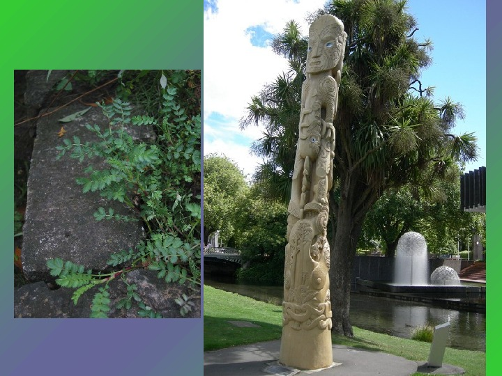 The culture of New Zealand is rich and diverse.  The elements of European,