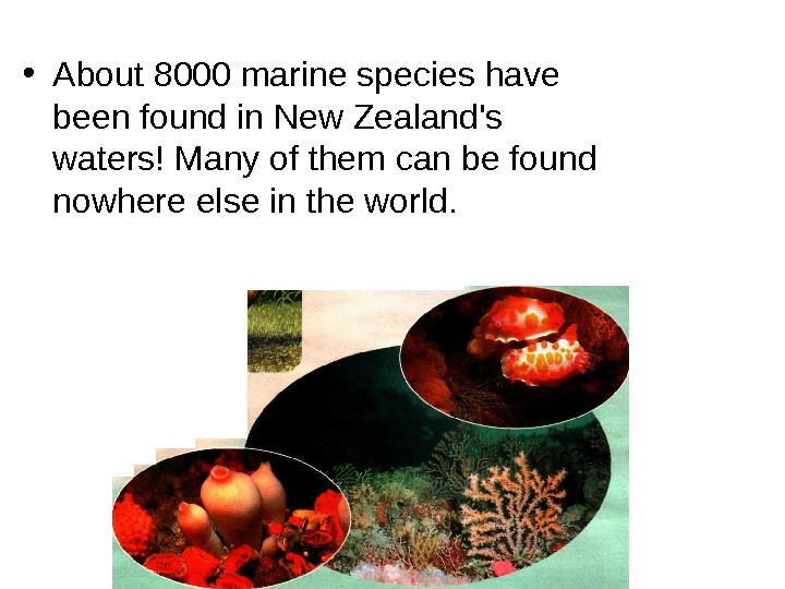• About 8000 marine species have been found in New Zealand's waters! Many of