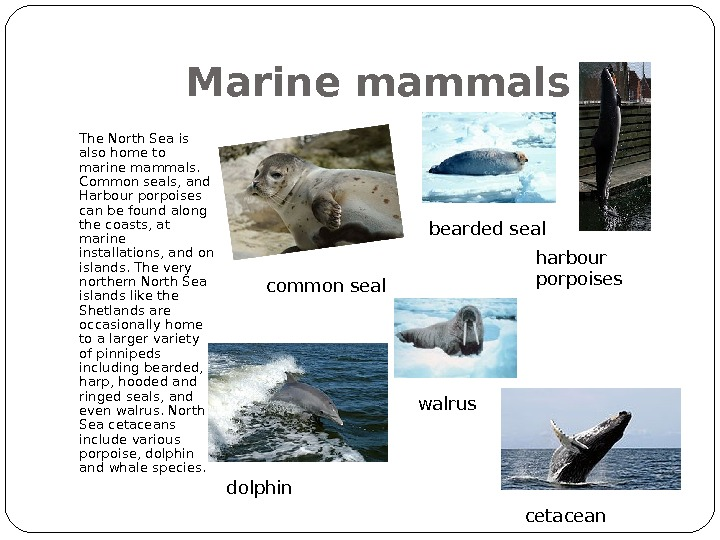 Marine mammals The North Sea is also home to marine mammals.  Common seals, and Harbour