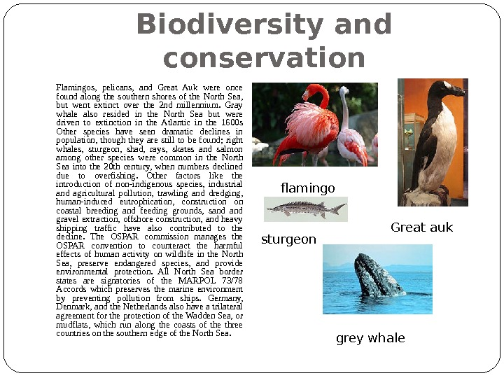 Biodiversity and conservation Flamingos,  pelicans,  and Great Auk were once found along the southern