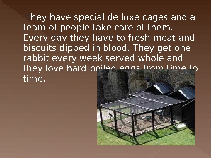 They have special de luxe cages and a team of people take care of them.