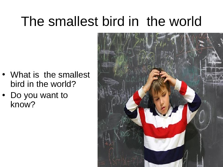 The smallest bird in the world • What is the smallest bird in the