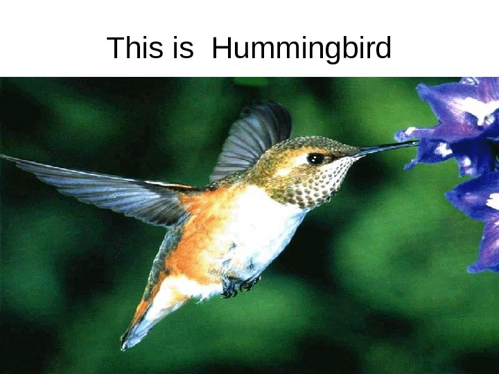 This is Hummingbird