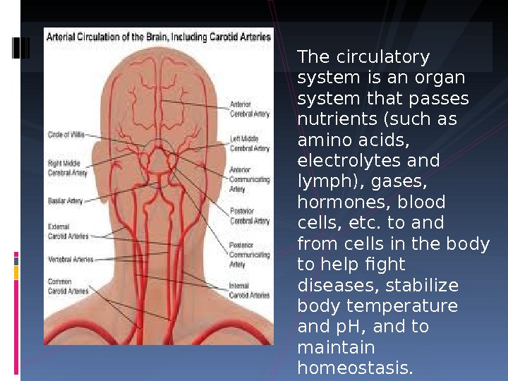 The circulatory system is an organ system that passes nutrients (such as amino acids,  electrolytes