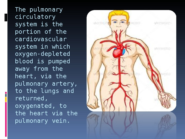 The pulmonary circulatory system is the portion of the cardiovascular system in which oxygen-depleted blood is