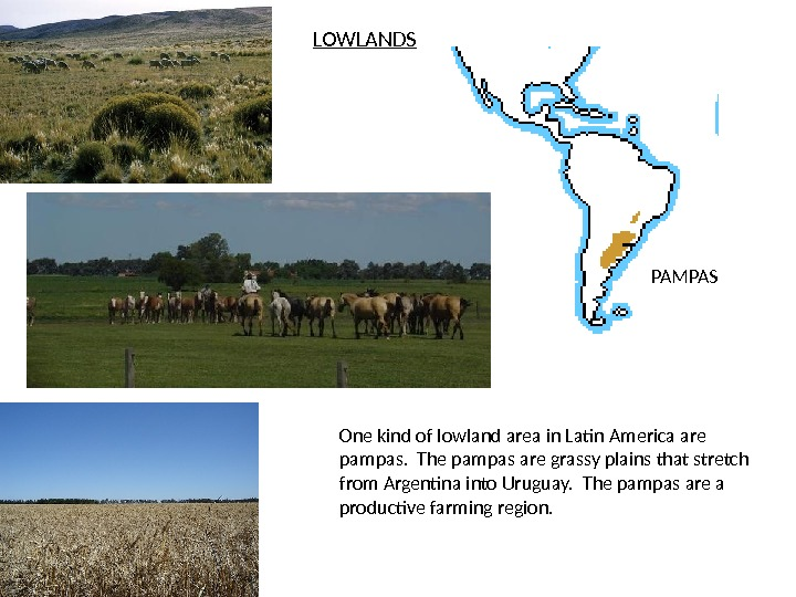 LOWLANDS PAMPAS One kind of lowland area in Latin America are pampas.  The pampas are