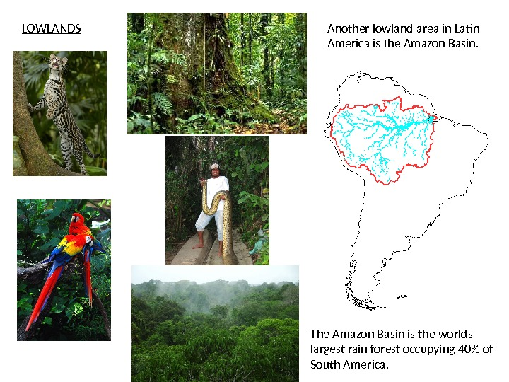 Another lowland area in Latin America is the Amazon Basin. LOWLANDS The Amazon Basin is the