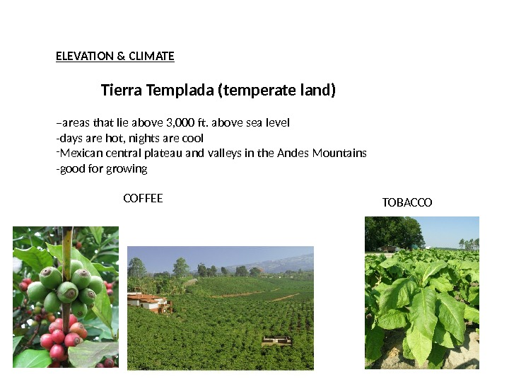 ELEVATION & CLIMATE Tierra Templada (temperate land) – areas that lie above 3, 000 ft. above