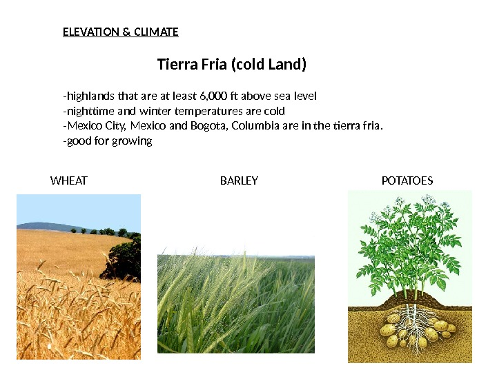 ELEVATION & CLIMATE Tierra Fria (cold Land) -highlands that are at least 6, 000 ft above