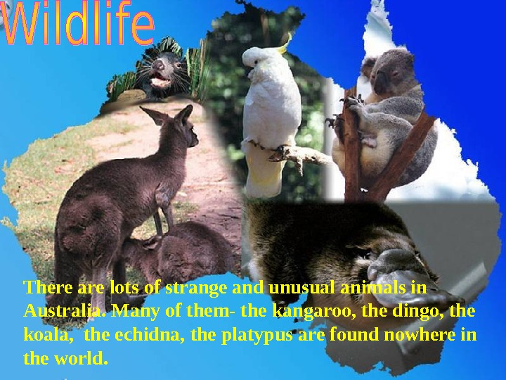 There are lots of strange and unusual animals in Australia. Many of them- the kangaroo, the