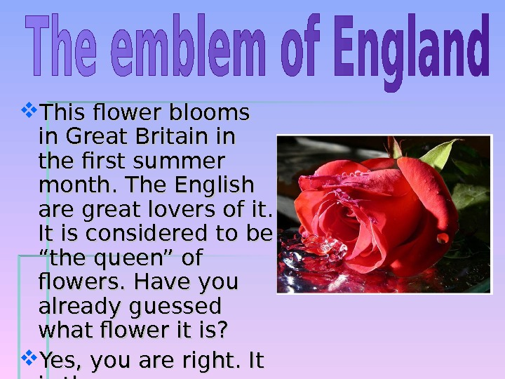 This flower blooms in Great Britain in the first summer month. The English are great