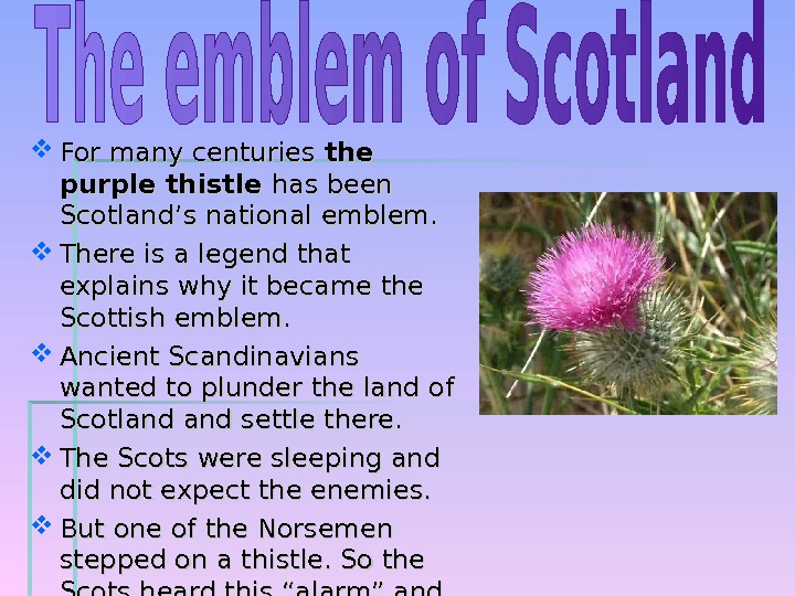 For many centuries the purple thistle has been Scotland's national emblem.  There is a