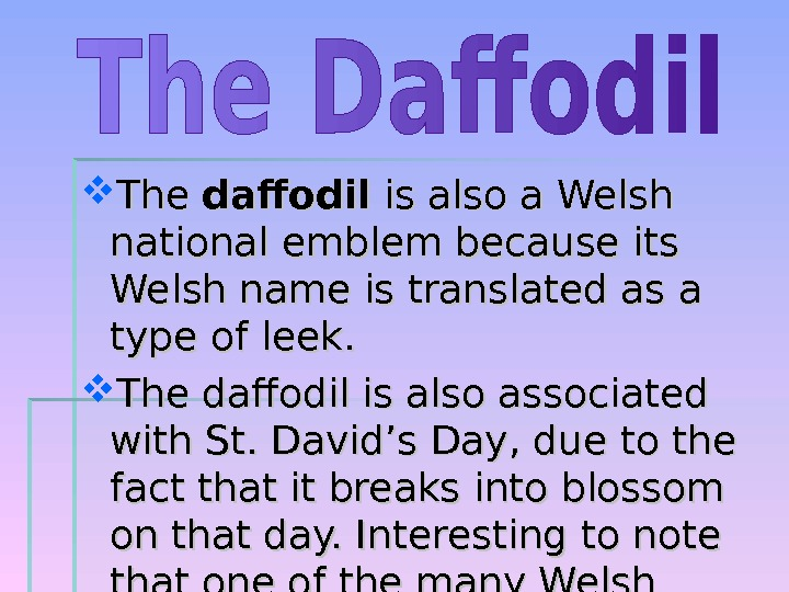 The daffodil is also a Welsh national emblem because its Welsh name is translated as
