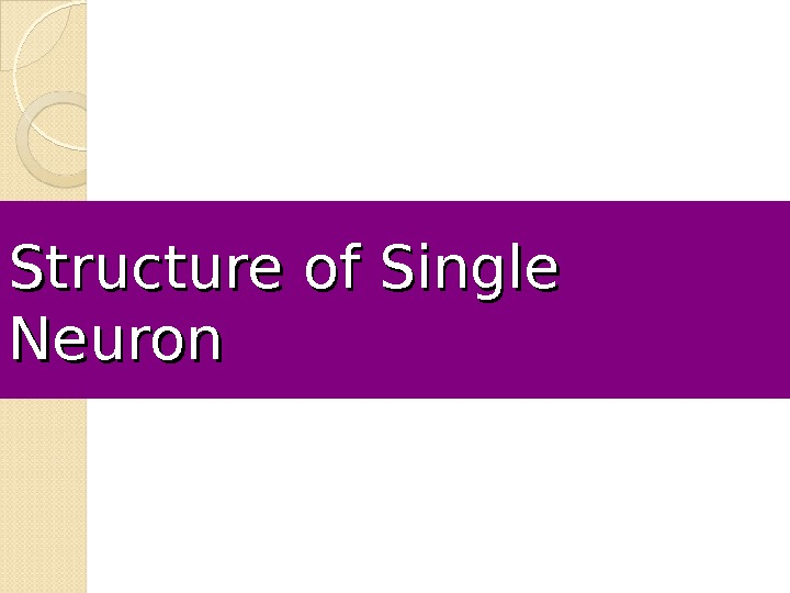 Structure of Single Neuron