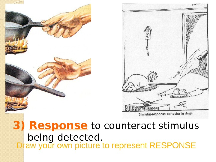 3) Response to counteract stimulus being detected. Draw your own picture to represent RESPONSE