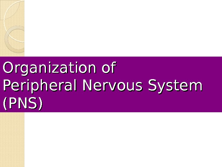 Organization of Peripheral Nervous System (PNS)