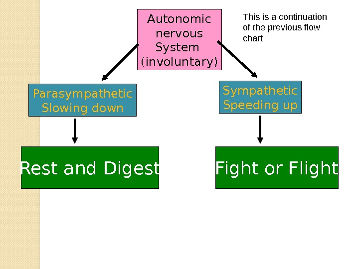 Autonomic nervous System (involuntary) Parasympathetic Slowing down Sympathetic Speeding up Fight or Flight. Rest and Digest