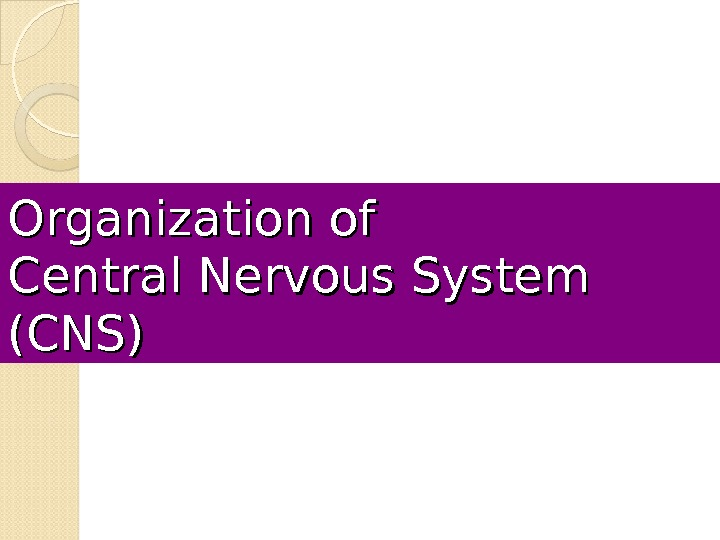 Organization of Central Nervous System (CNS)