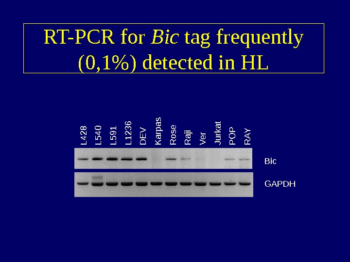 RT-PCR for Bic tag frequently (0, 1) detected in HLL 4 2 8 L