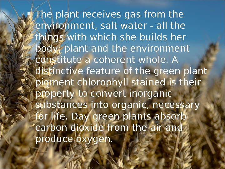The plant receives gas from the environment, salt water - all the things with which