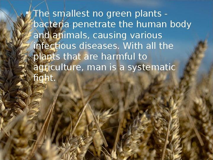 The smallest no green plants - bacteria penetrate the human body and animals, causing various
