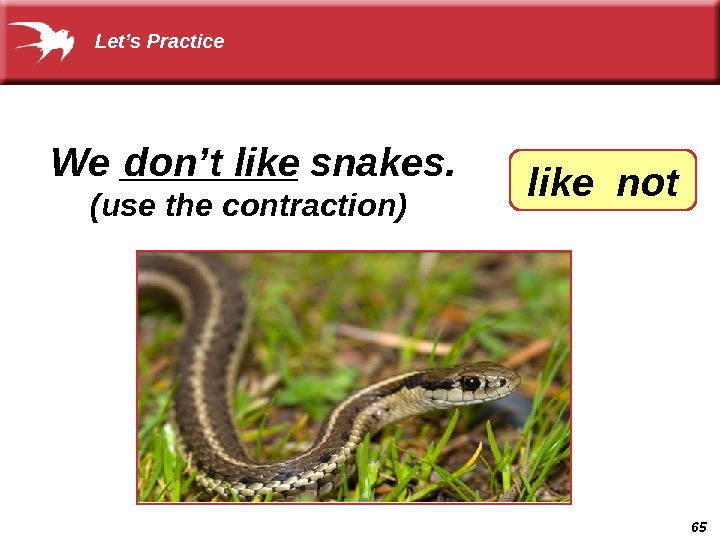 65 We ____ snakes. don't like (use the contraction) like not Let's Practice