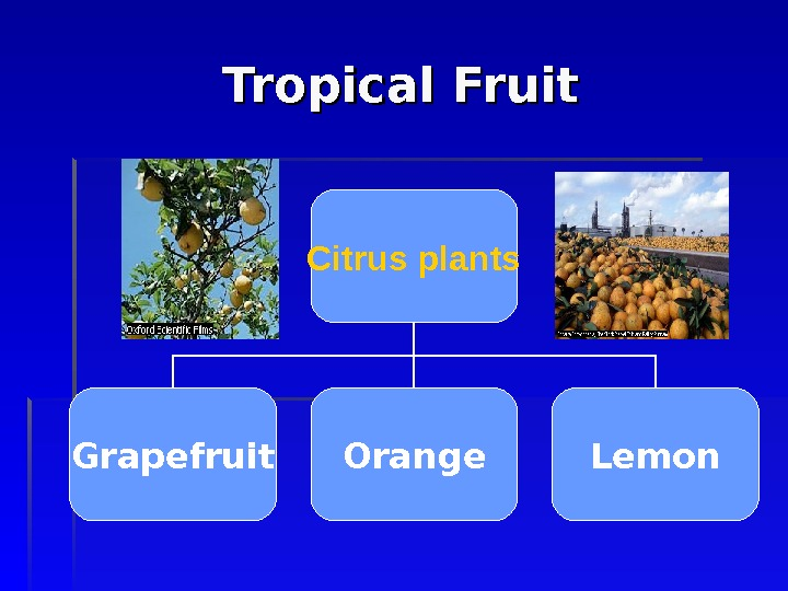 Tropical Fruit Citrus plants Grapefruit Orange Lemon