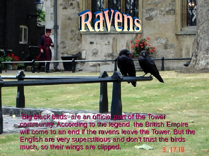 Big black birds are an official part of the Tower community. According to the