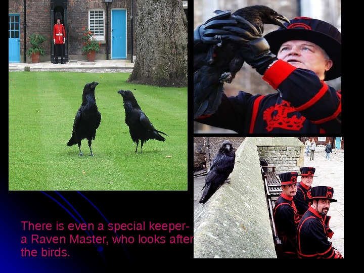 There is even a special keeper- a Raven Master, who looks after the birds.