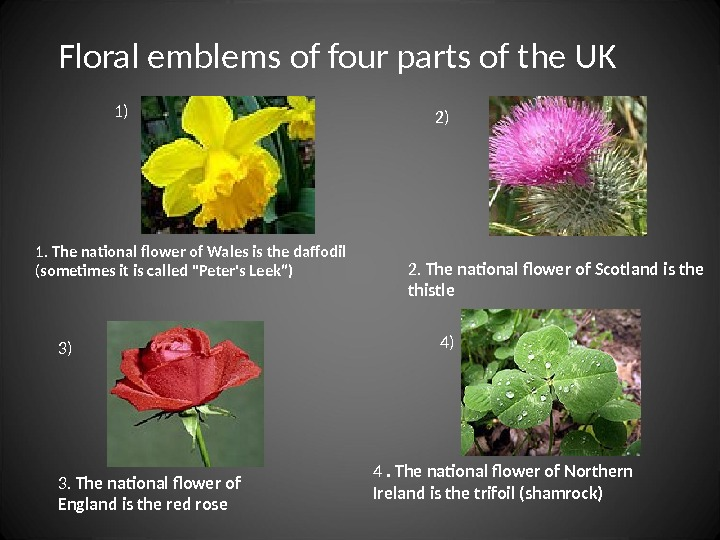 2.  The national flower of Scotland is the thistle 1.  The national flower of