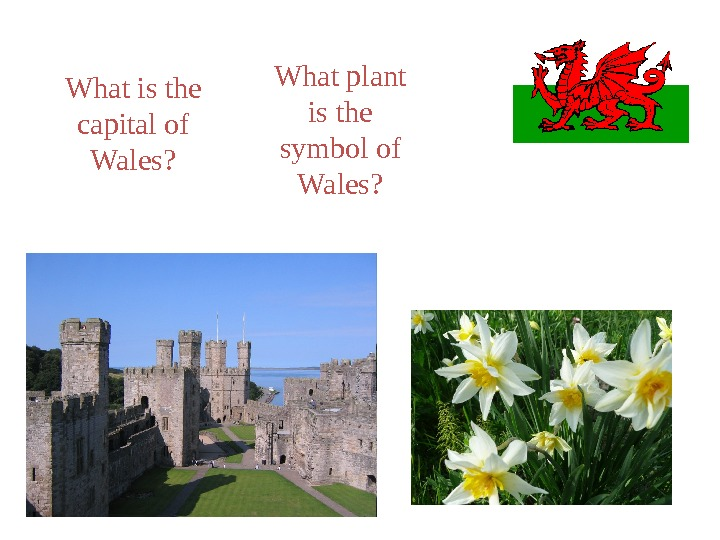 What is the capital of Wales? What plant is the symbol of Wales?