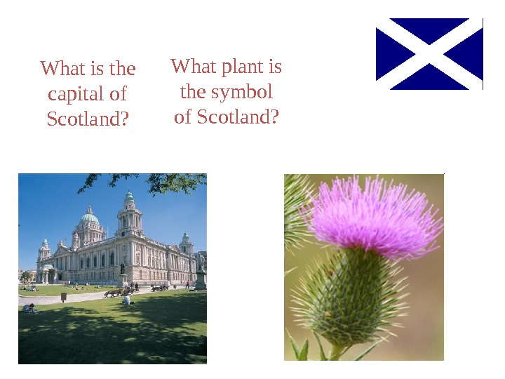 What is the capital of Scotland? What plant is the symbol of Scotland?