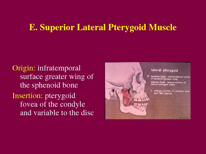 E. Superior. Lateral. Pterygoid. Muscle Origin: infratemporal surfacegreaterwingof thesphenoidbone Insertion: pterygoid foveaofthecondyle andvariabletothedisc