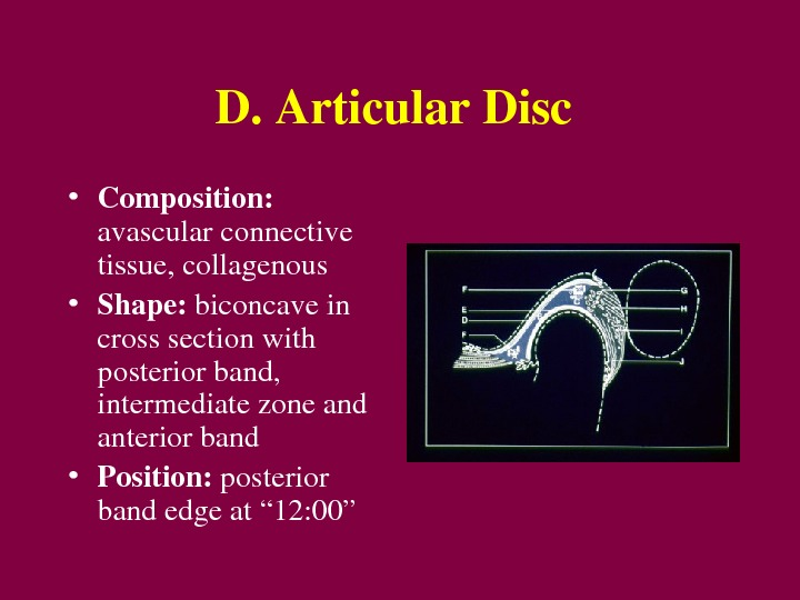 D. Articular. Disc • Composition: avascularconnective tissue, collagenous • Shape: biconcavein crosssectionwith posteriorband, intermediatezoneand anteriorband •
