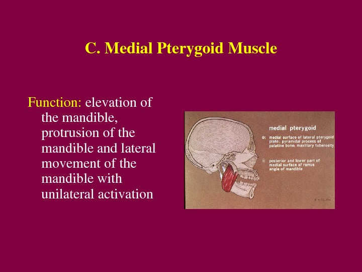 C. Medial. Pterygoid. Muscle Function: elevationof themandible, protrusionofthe mandibleandlateral movementofthe mandiblewith unilateralactivation