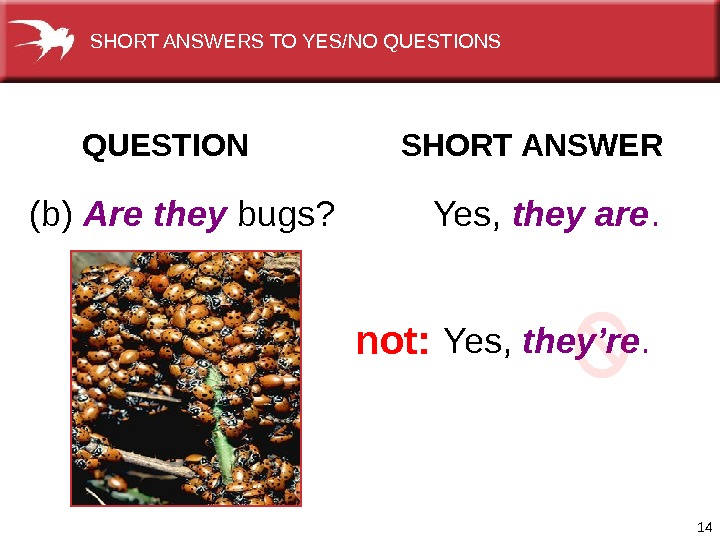 14 QUESTION  SHORT ANSWER (b) Are they bugs? Yes,  they are. Yes,  they're.