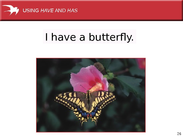 26 I have a butterfly. USING HAVE AND HAS